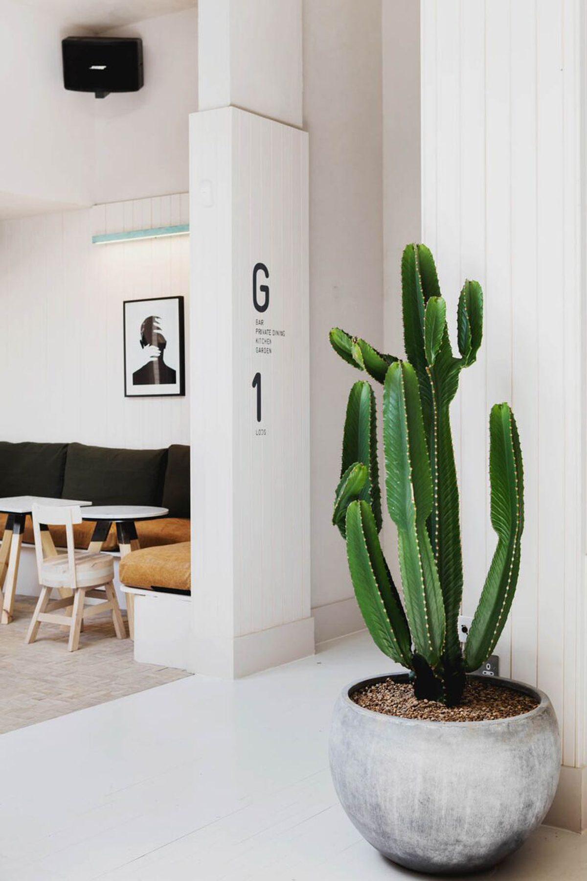 little one cactus